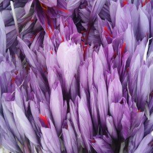 خواص گلبرگ زعفران1