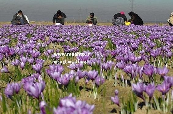 فروش زعفران سرایان۱
