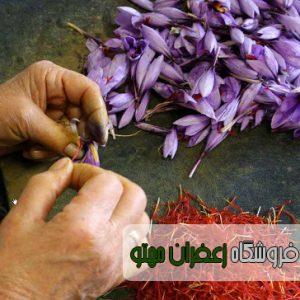 قیمت روز زعفران خشک اعلا در مشهد1