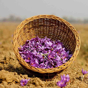 Buy Saffron in Iran