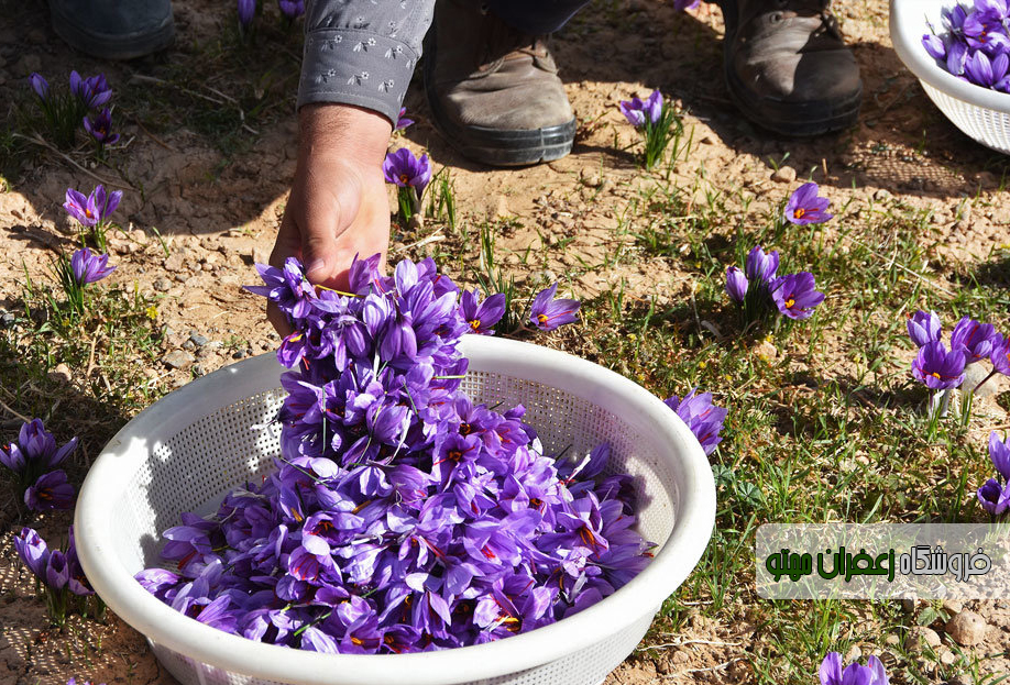 Buy saffron for export