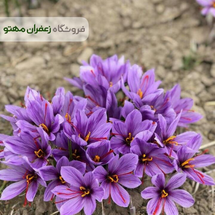 saffron-store