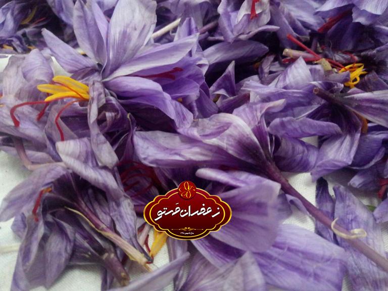 پاک-کردن-گل-زعفران۱