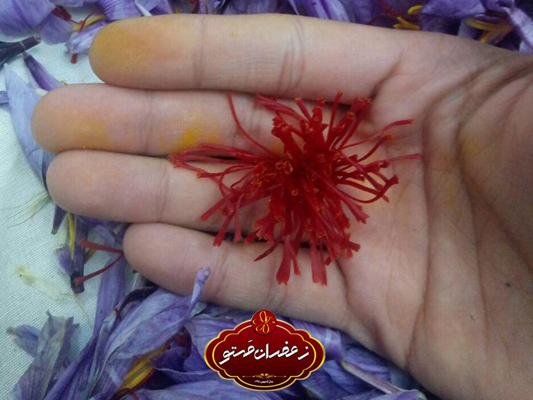 پاک-کردن-گل-زعفران2