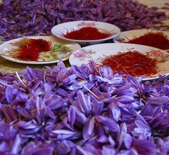 Saffron-purchase-price-this-year1