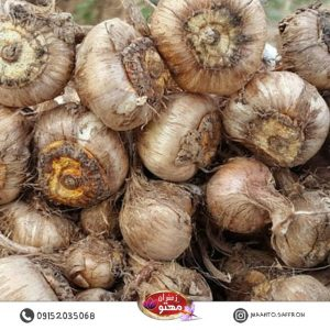 onion-saffron